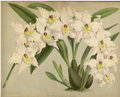 The Orchid Album-01-0143-0047.png