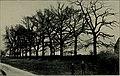 The book of the English oak (1911) (19775904083).jpg