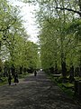 The central avenue, Brompton Cemetery SW10 - geograph.org.uk - 1262455.jpg