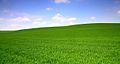 The field (3514290419).jpg
