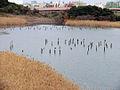 Tokyo Port Wild Bird Park 06.jpg