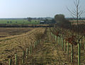 Towards Whinneymoor Farm - geograph.org.uk - 692575.jpg