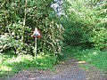 Toytop Wood - geograph.org.uk - 16039.jpg
