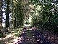 Track to Bryngolau - geograph.org.uk - 1432113.jpg