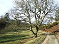 Track to Munslow Common, Shropshire - geograph.org.uk - 676166.jpg