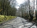 Tree-lined road through Melbury Plantation - geograph.org.uk - 1198433.jpg