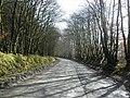 Tree-lined road through Melbury Plantation - geograph.org.uk - 1198433.jpg