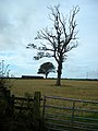 Trees Near Hannah - geograph.org.uk - 565054.jpg