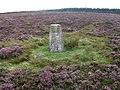 Trig point S5302 at Long Ridge End - geograph.org.uk - 1475907.jpg