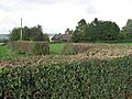 Trimmed Hedges And A Chalet - geograph.org.uk - 266634.jpg