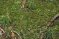 Tritomaria exsecta (a, 113252-471408) 6928.JPG