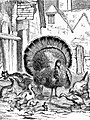 Turkey in Barnyard Drawing.jpg