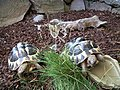 Turtle Party (4804248637).jpg