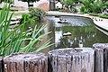 Turtle Pond University of Texas Austin 2.jpg