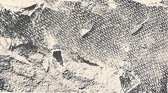 Mosasaur - Scales of Tylosaurus proriger (KUVP-1075)