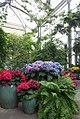U.S. Botanic Garden in May (23777717575).jpg
