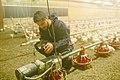 UFV - Agriculture Students Work Practicum (14007760353).jpg
