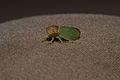 Unbekanntes Insekt 4559.jpg