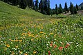 Up Flower Meadow Mineral King.jpg