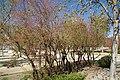 VIEW , ®'s - DiDi - RM - Ð 6K - ┼ , MADRID PARQUE de PEÑUELAS JARDÍN - panoramio (118).jpg