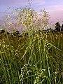 Vakareja, 2006-07-09.JPG