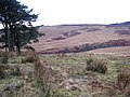 Valley of the Bellshiel Burn - geograph.org.uk - 655757.jpg
