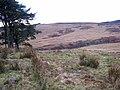 Valley of the Bellshiel Burn - geograph.org.uk - 655757.jpg