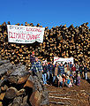 Victorian Central Highlands log dump 03 Pengo.jpg