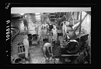 Vintage activities at Richon-le-Zion, Aug. 1939. Grapes going into the hopper for crushing LOC matpc.19777.jpg
