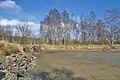 Vypuštěný rybník v přírodní rezervaci Pavlovské mokřady, okres Blansko.jpg