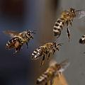WRM Bees - Bienen.jpg