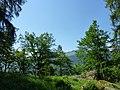 Waldreservat Plontabuora4.jpg