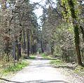 Waldweg bei Haßloch - panoramio.jpg