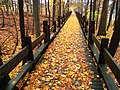 Walkway in autumn - Choate Rosemary Hall.jpg