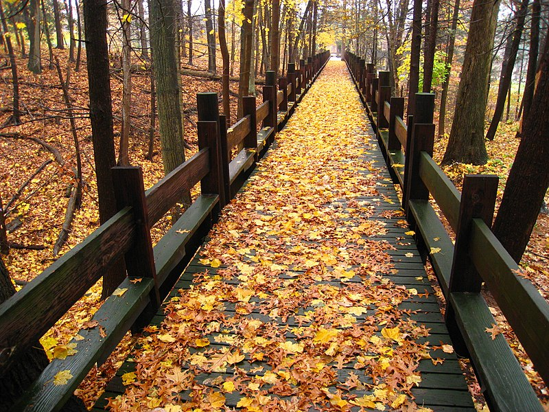 File:Walkway in autumn - Choate Rosemary Hall.jpg