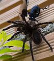 Wasp x spider.jpg