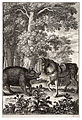 Wenceslas Hollar - Boar and ass 2.jpg