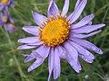 Wet Flower (60022430).jpeg