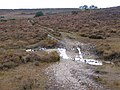 Wet path north of Leaden hall, New Forest - geograph.org.uk - 277139.jpg