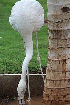 White Big Emigrant Bird.jpg