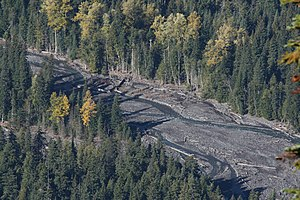 White River (Washington) - The White River exhibits braided river and meander behavior with coarse woody debris deposited on extensive gravel bars. Populus trichocarpa, with its brilliant yellow fall foliage, grows alongside in the Abies amabilis forest.