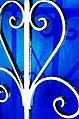 White on blue (278665484).jpg