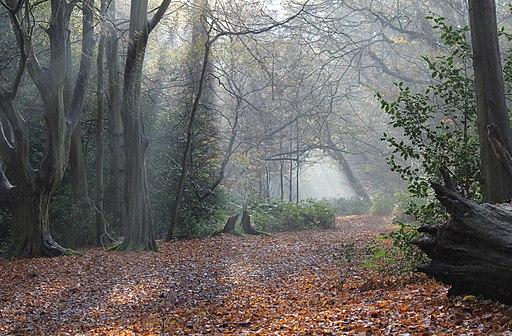 Whitewebbs Park, Enfield (2)