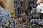 Who wants to pet an E-7? 110509-A-ZR356-138.jpg