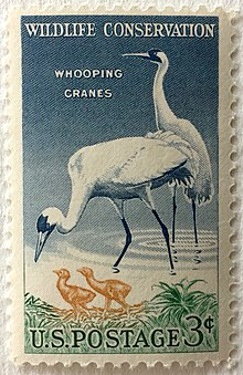 I Hope This Crane Is Just Hiding Other >> Whooping Crane Wikipedia