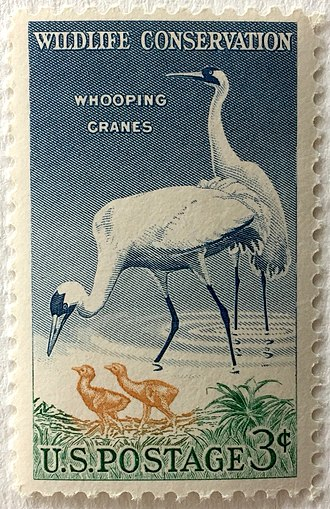 Whooping crane - In 1957, the whooping crane was featured on a U.S. postage stamp supporting wildlife conservation.