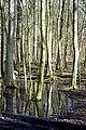 Wierschem rainprints.jpg