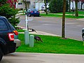 Wild Turkey in the Neighborhood - panoramio.jpg