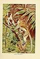 Wild life of the world (Plate 11) (9135267594).jpg