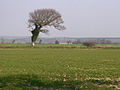 Wind-blown tree - geograph.org.uk - 383888.jpg